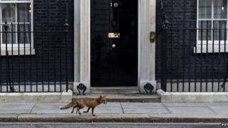 Fox on Downing Street
