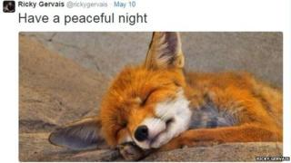 A picture of a sleeping fox cub