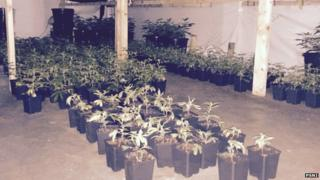 Police released photographs of the cannabis discovered in a house in Annalong