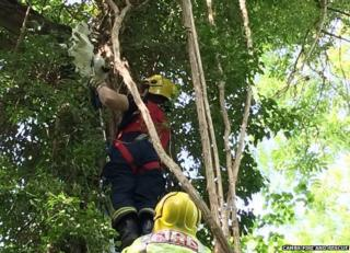 Cat being rescued from tree