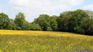 The Birches Farm site