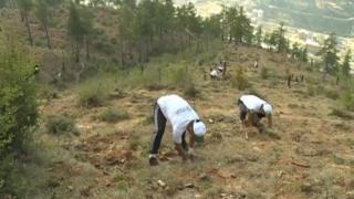 Volunteers breaking the world tree planting record in Bhutan (02 May 2015)