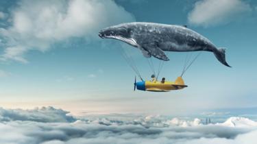 Avión llevado por una ballena