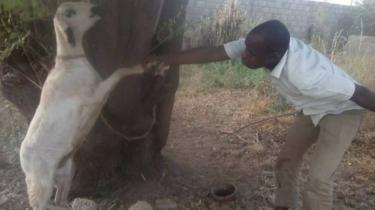 CulturEbene posted this image of a man bowing to a goat
