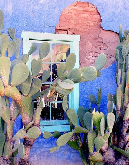نبتة صبار مقابل نافذة