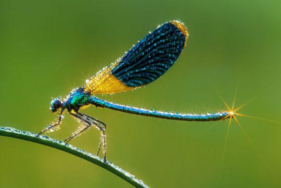 Detalle de una libélula