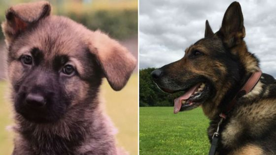 Guide dog puppy Finn named after 'hero' police dog