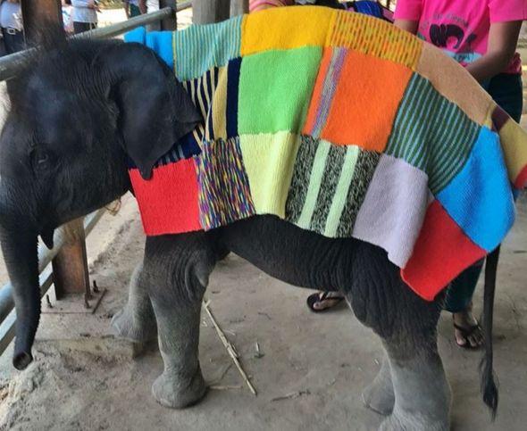 Baby elephant in woolly jumper