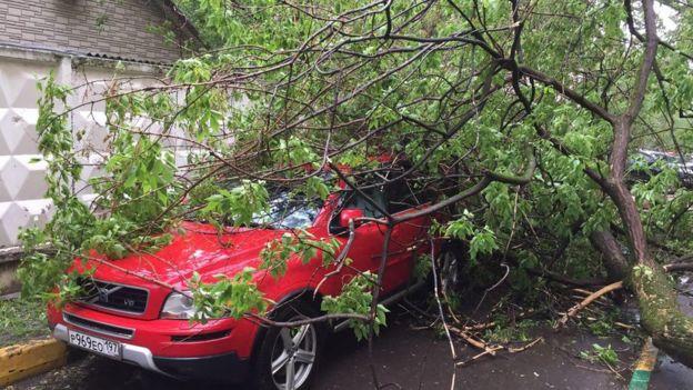 придавленный деревом автомобиль