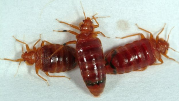 Effective way for killing bed bugs