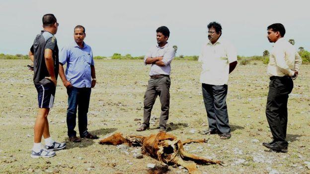 Sri Lanka Neduntheevu Horse death due to drought