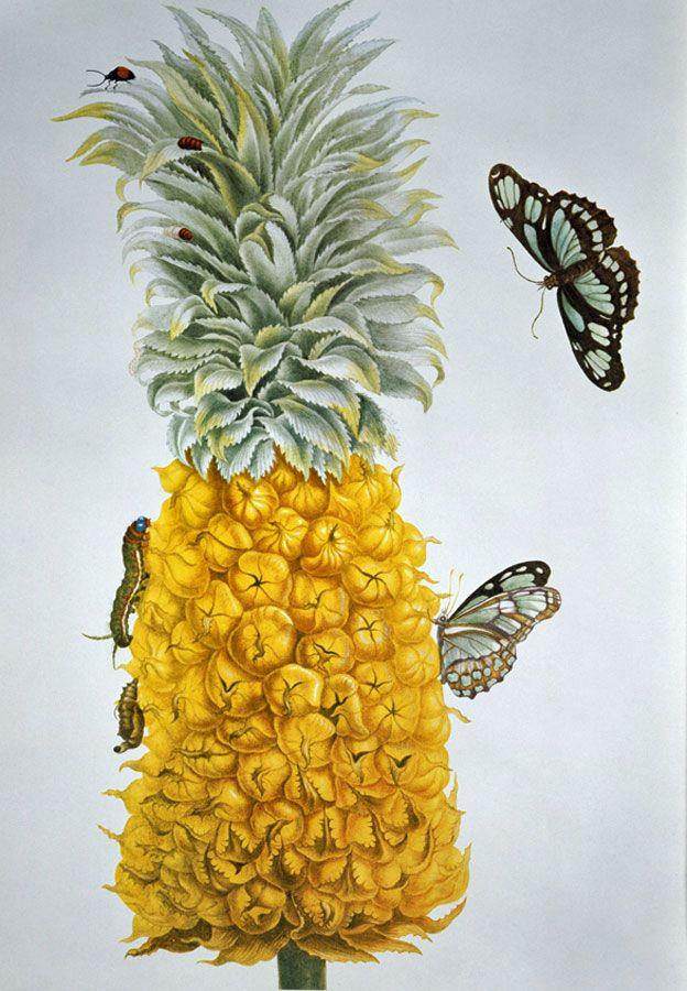 Piña e insectos