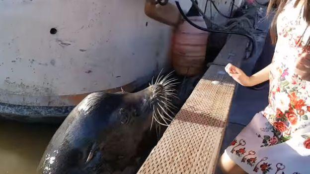 El lobo marino, muy cerca de la niña