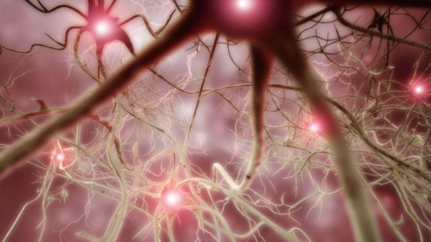 nöronlar, sinir hücreleri
