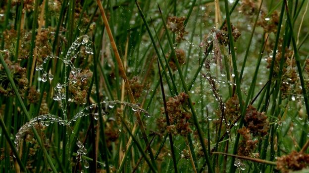 Wet grass in the countryside