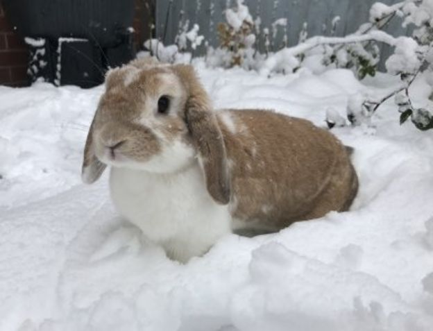 Redditch Rabbit