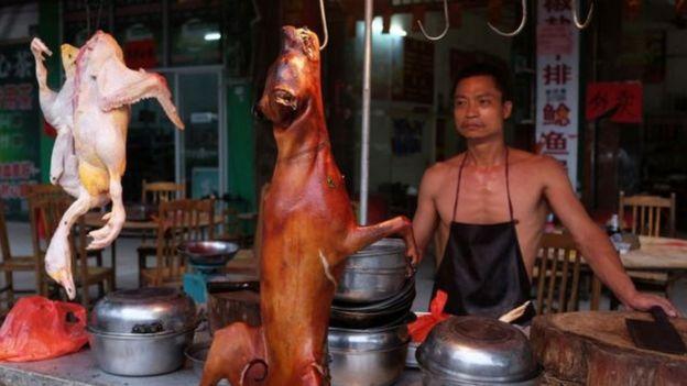 Cães vendidos em festival na China