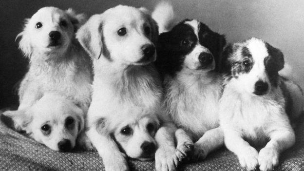 مجموعة من كلاب الفضاء Alamy