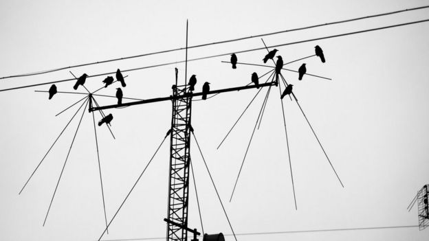 Birds perched on an antenna