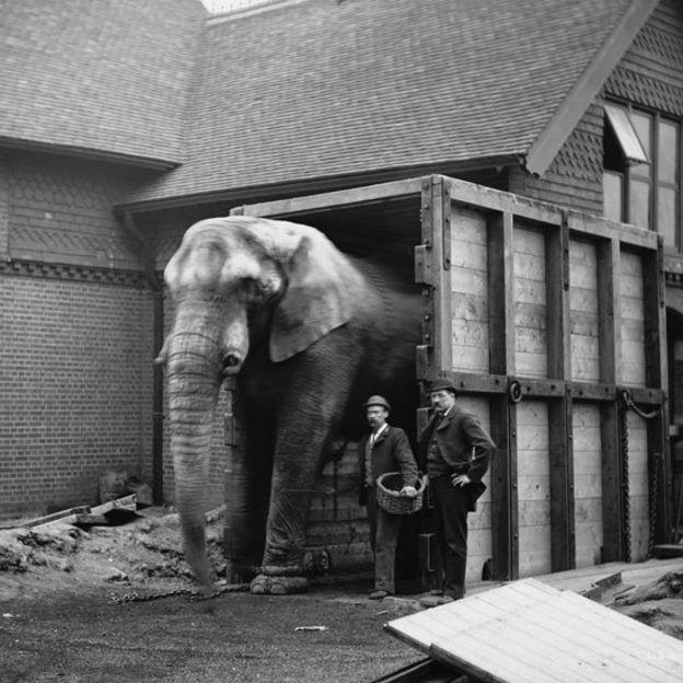 Jumbo junto a su cuidador Matthew Scott y otro hombre en el Zoológico de Londres Foto: Wiki Commons