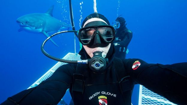 A diver and a shark