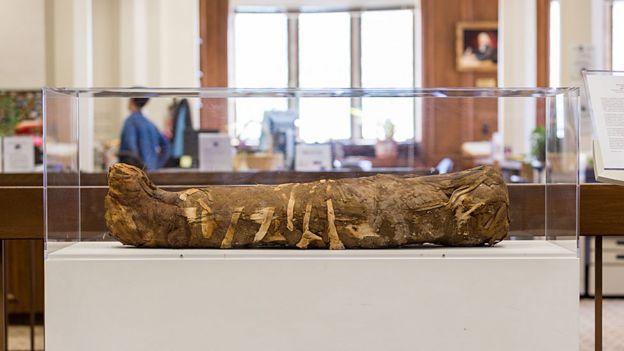 Múmia durante exposição