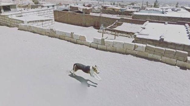 Un perro corre en un calle solitaria en Arequipa, Perú