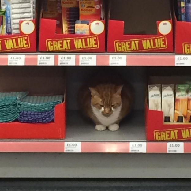 Store Bans Cat, Customers Upset
