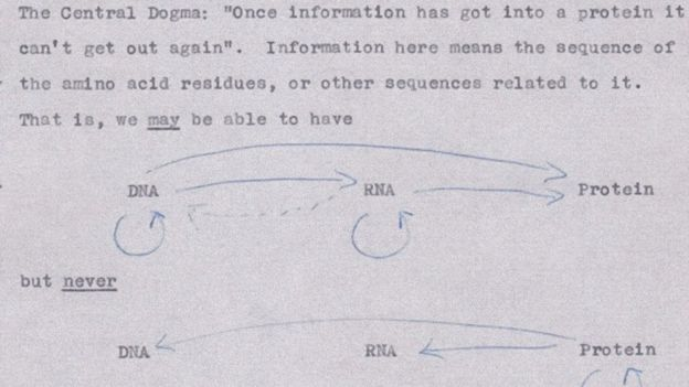 Crick's 'central dogma' diagram (c) Wellcome Library