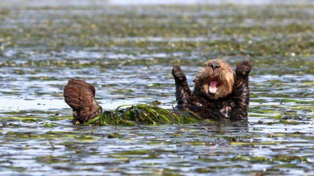 Otter. Photo: Penny Palmer