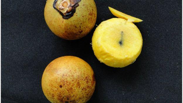 Fruto del coyol.