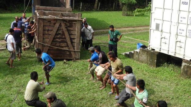 Teams help unloads the returning rhino