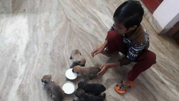 Kennel manager Kukku's son helps out with the pups