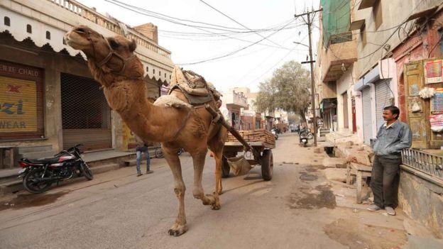 Un camello en una calle de India. (Foto: Peter Leng / Neha Sharma)