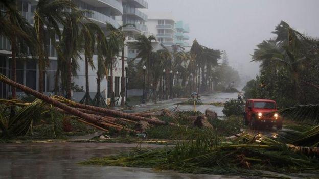 Árboles en las calles de Miami Beach