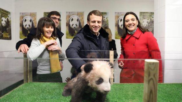 """12月16日,馬克龍滿40歲生日當天,前往""""圓夢""""所在的法國中部聖艾里昂布沃爾動物園(ZooParc de Beauval)過生日。"""