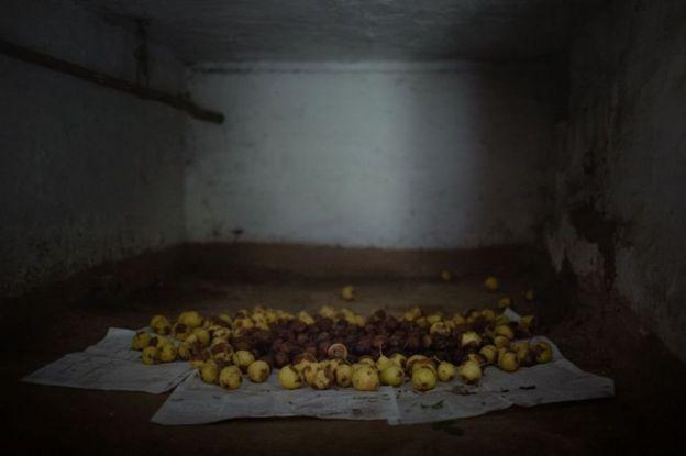 Ukrayna, Çernobıl, qadağan zona, tərk edilmiş kənd, çürümüş armudlar