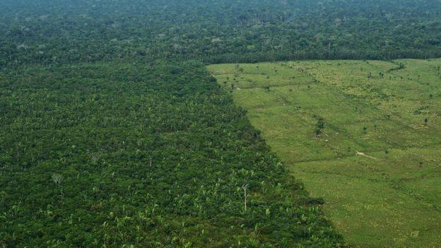kesilmiş yağmur ormanları