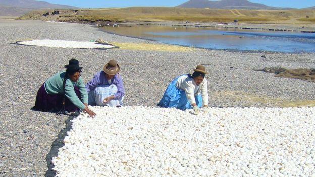 Mujeres preparando chuño en Ilave, Puno, Perú, 2008