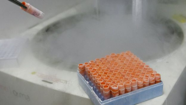 Embryonic stem cells frozen in a laboratory