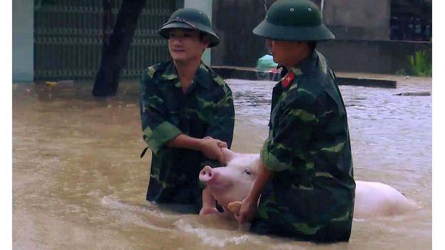 Mưa lụt gây thiệt hại cho nông nghiệp