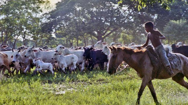 Niño arriando a caballo (Foto: Centro de Diversidad Cultural / Unesco)