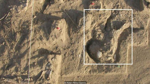 Các mẫu hóa thạch mới được phát hiện tại Tây Ban Nha
