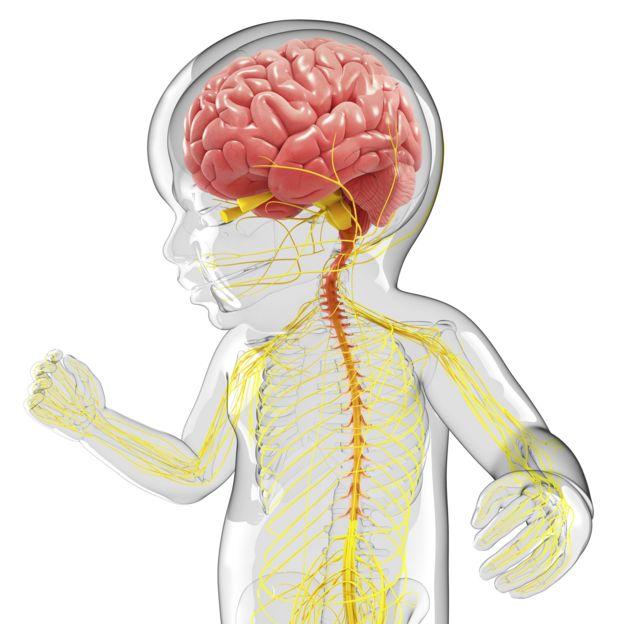 یونیسف گفته است تنفس ذرات سمی هوا به سلولهای مغز آسیب میرساند و تکامل آن را تضعیف میکند