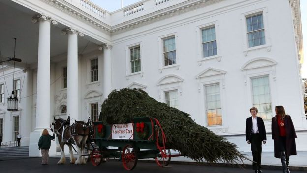 К белому дому подвозят елку