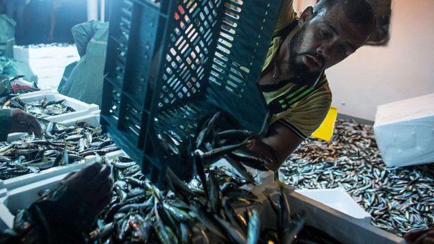 Una carga de pescado en un barco