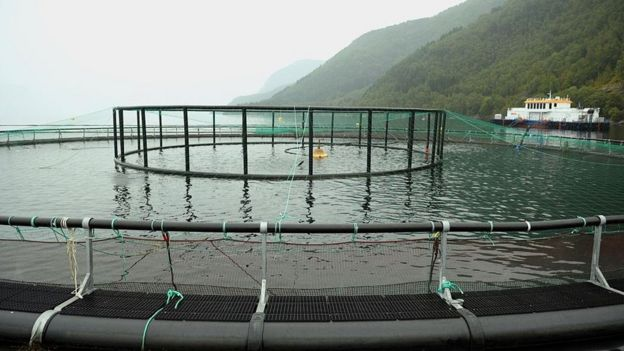 Granja de salmón