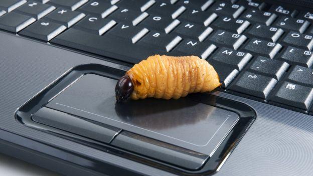 a worm on a keyboard