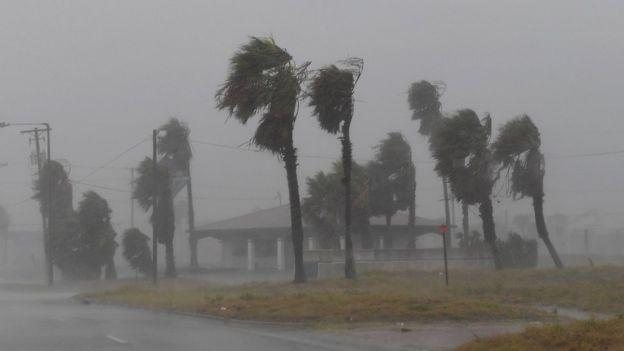 Árboles zarandeados por las ráfagas del viento durante el huracán Harvey.