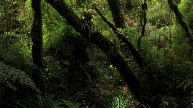 floresta onde o sapinho coloratus foi encontrado